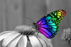 butterfly-286280_640