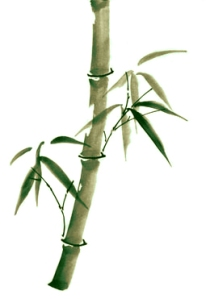 Do you flex and adapt in the winds of life, or shatter easily like a stalk of dried bamboo?