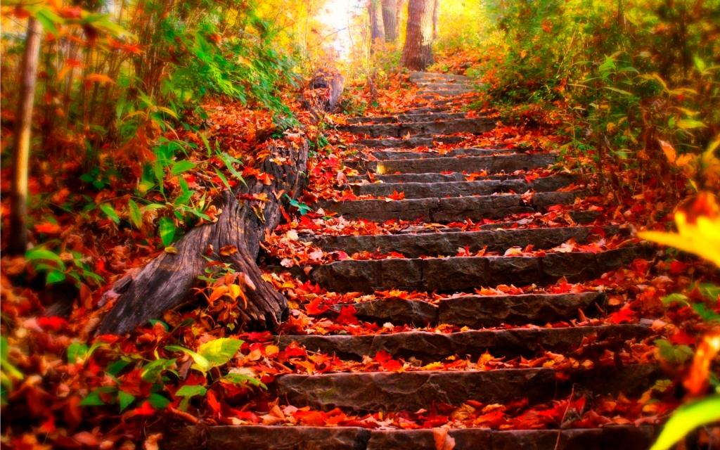 Steps towards Fall Balance...